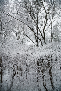 snow_december2010_12