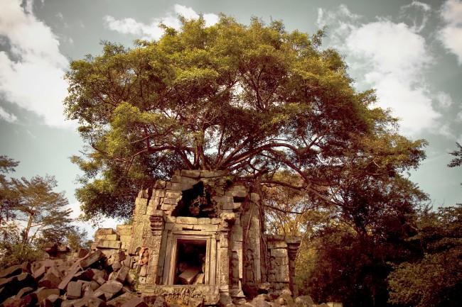 Jungle Temple - Cambodia